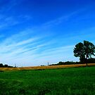Iowa Fields by Linda Miller Gesualdo
