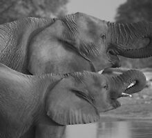 Elephants, Namibia by Clive Temple