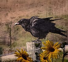 The Raven by CarolM