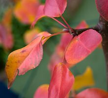 Autumn Colours by Katrina Freckleton