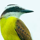 Portrait Of A Kiskadee by Robert Abraham