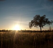 Spinifex Sunrise by Stephen Dwight