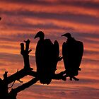 Waiting Vultures by Kim Andelkovic