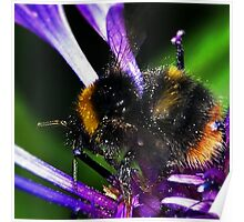Bumble Bee Buzz Poster