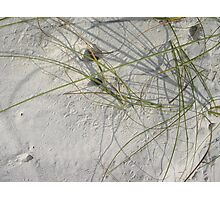Squiggles, skitters and crab holes Photographic Print