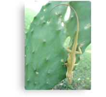 Anole on Cactus Metal Print