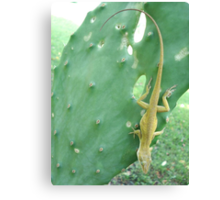 Anole on Cactus Canvas Print