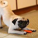 Carrot time by Sangeeta
