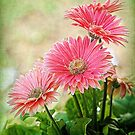Front Porch Gerbera by Nancy Bray