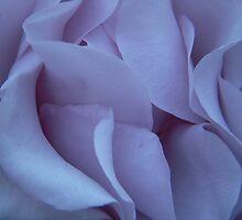 Blue-Violet by Tama Blough