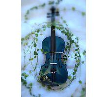 il violino blu con edera © 2010 patricia vannucci Photographic Print