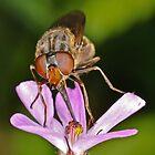 Pollination by Gareth Jones
