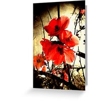 Spring Red 3     Greeting Card