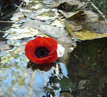 Poppy by Emma Grimberg