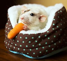 Echo's First Carrot by Laura Hoffmann