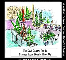 Real Reason Marijuana Stronger 2day Than In 60s By Londons Times Cartoons by Rick  London
