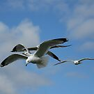 Running late for the Synchro flight by Janika