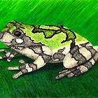Bird Voiced Tree Frog by M Rogers