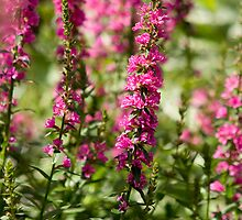 Tall Pink Flowers by Mark Wuttke