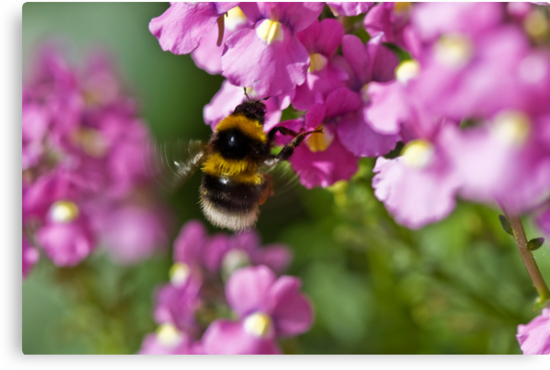 Garden bumble bee by inkedsandra