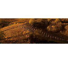 Uphill and down, Bolzano-Bozen, Italy, 2009 Photographic Print