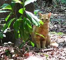 Pretty Kitty Cat by Jonathan  Green