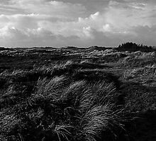 Dunes of Denmark  by Jan  Postel