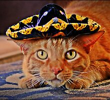 Cat in the Black Sombrero by Diana Cardosi-Bussone