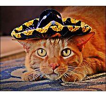 Cat in the Black Sombrero Photographic Print