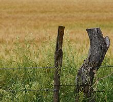 The fencepost by itself by agenttomcat