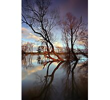 """""""The Tree's"""" Photographic Print"""