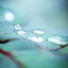 Morning Rain by andrewwebb