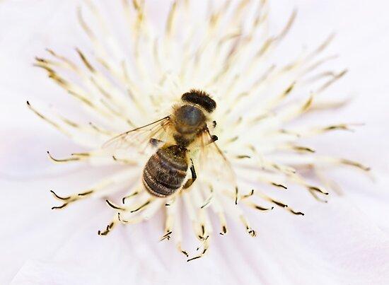 Honey,honey by inkedsandra