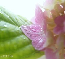 Hydrangea 6 - After rain by aMOONy