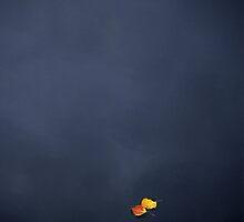 Fall Aspen leaves on Posey Lake, Utah by Brian Hendricks