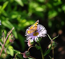 Butterfly On Flower by CjbPhotography