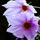 pinky purplie pair by waterchild