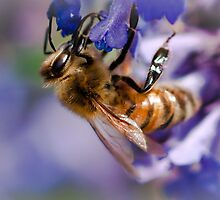 Blue Heaven for Honey Bees by David Friederich