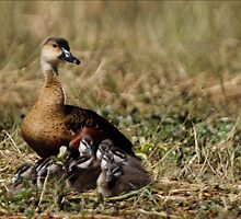 Wandering Whistling Ducks by Jeremy Weiss
