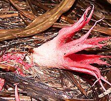 Help to Identify 2. It is Starfish Fungus. by Eeva47
