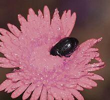 Ostrich Beetle by Bronwyn Bruce