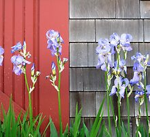 Weeks Boatyard Iris Patch by nadinecreates