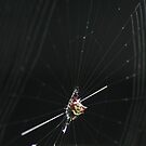 spinybacked orbweaver by intothevoid0208