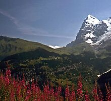 The Eiger with Flowers #2 by David J Dionne