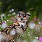 Owl in the meadow by Val Saxby