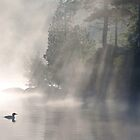 A Loon In The Mist by Brian Pelkey