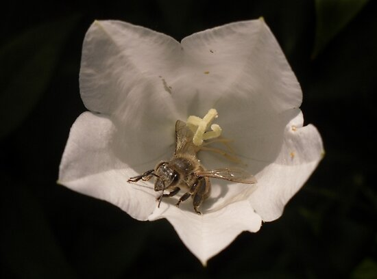 Bee-ing busy by emilygoodwin