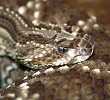 Tropical Rattlesnake by Katherine Haluska