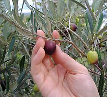 Fresh Olives, Hunter Valley by Minxie