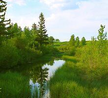 Cochrane Pond by Barrie Daniels